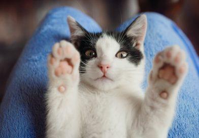 Adottare un animale da compagnia: Pro e Contro